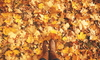 A pile of orange fall leaves and a pair of brow women's boots.