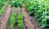 backyard kitchen vegetable garden