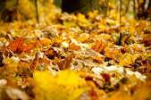 make and apply leaf mulching