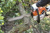 A chainsaw cutting a tree.