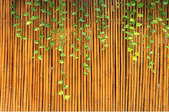 Bamboo fence with ivy hanging down
