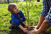 A boy and adult planting a tree.