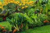 Growing an Attractive Front Yard Vegetable Garden