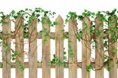 wooden garden picket fence with vines growing on it