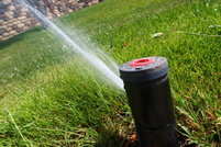 A low angle sprinkler in action.