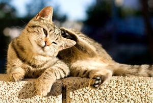 A cat scratching itself.