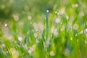 6 Simple Steps to Organic Lawn Care