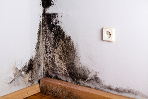 Black Mold in the corner of a room