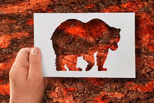 A bear stencil