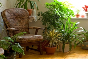 A corner filled with well-tended houseplants.