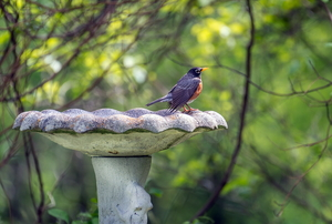 A concrete bird bath.