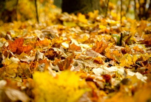 make and apply leaf mulching