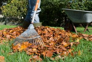A leaf rake.