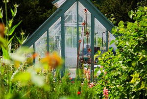 Looking through a lush garden at a small greenhouse.