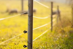 thin electric fence wires on a sunny grassy field