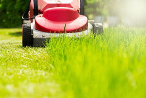 An electric lawn mower cuts grass.