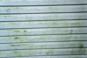 Mildew and algae growing on white vinyl siding.