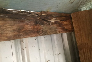 Roofline inside a shed