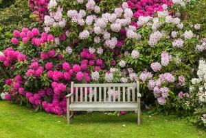 bench next to tall blooming flowers