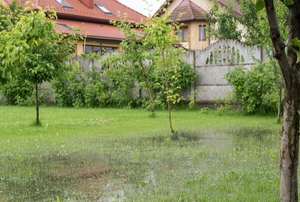 flooded lawn with trees