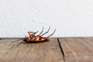 A dead cockroach.