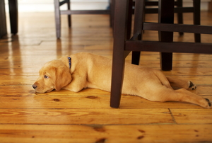 dog laying under a table on hardwood flooring