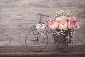 A bicycle planter with roses in front os a shabby-chic painted wall.
