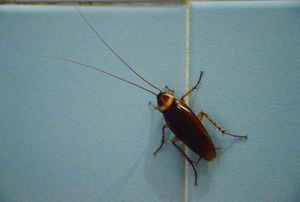 cockroach on wall tile