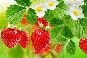 A strawberry plant.