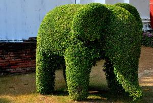 A hedge pruned into the shape of an elephant