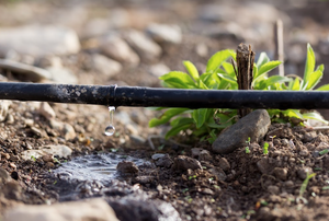 A drip irrigation system.