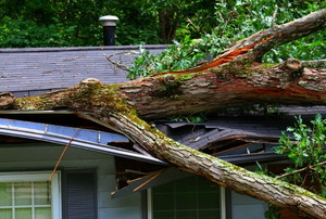 A tree brought down on a roof by a storm.