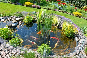 Fish pond in a landscaped yard