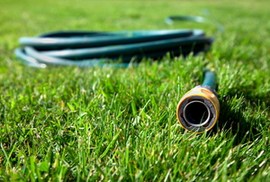 The end to a water hose sitting out on the lawn.