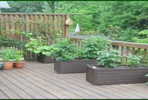 A deck with plants