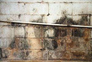 moldy wall