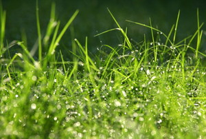 A close-up of wet grass.