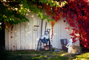 A white shed with fall leaves and tools in front of it.