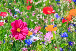 Wild flowers in a field.