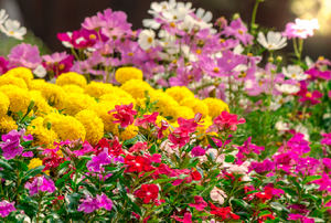 A variety of colorful layered flowers