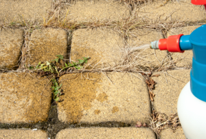 How to Kill Sidewalk Weeds in 3 Easy Steps