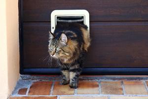 A pet door.