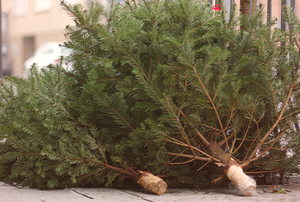Christmas trees piled on a sidewalk