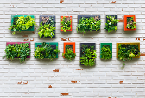 Vertical garden on brick wall