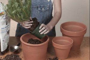 woman planting in a terra cotta planter