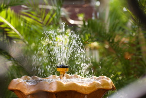 A fountain in a garden.