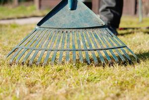 A green metal rake on a lawn.