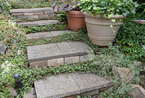 concrete steps in a garden