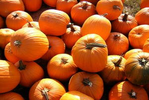 A pile of pumpkins, waiting to become decorations.