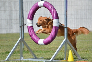 dog jumping through playground hoop